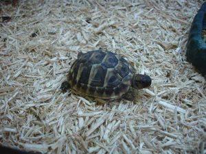 reptile care tortoise