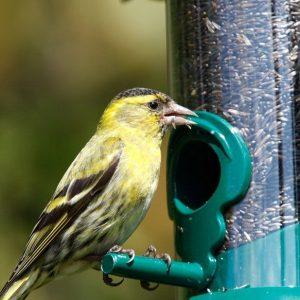 feed birds garden