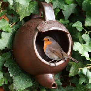 feeding birds robin