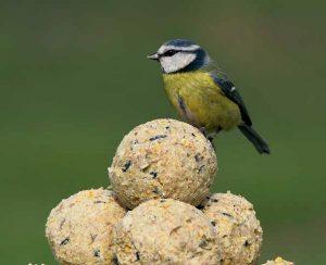 Feed the Birds Winter fat ball