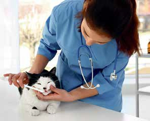 Dental Care for Pets cat
