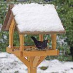 feeding garden birds during winter