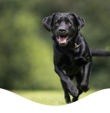 brilliant salmon oil dog