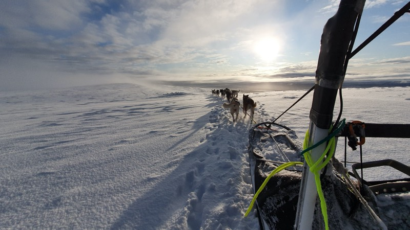 Sledge Dogs In The Mountains