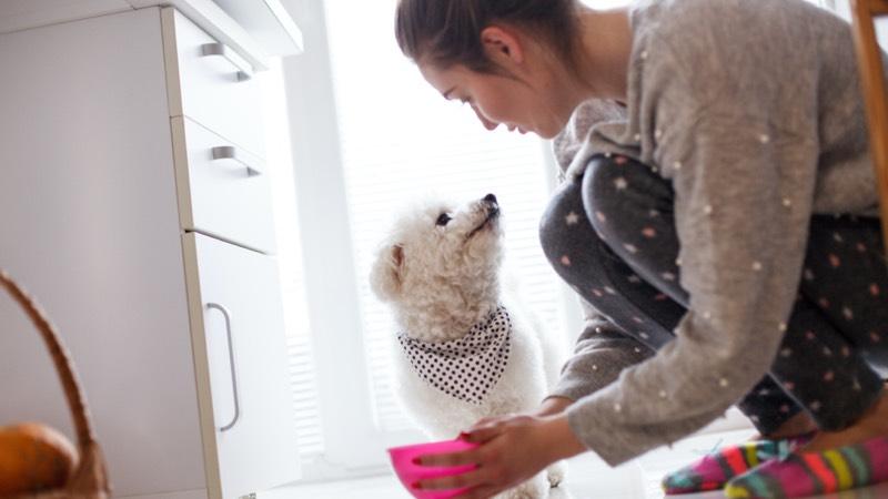Lady feeding dog