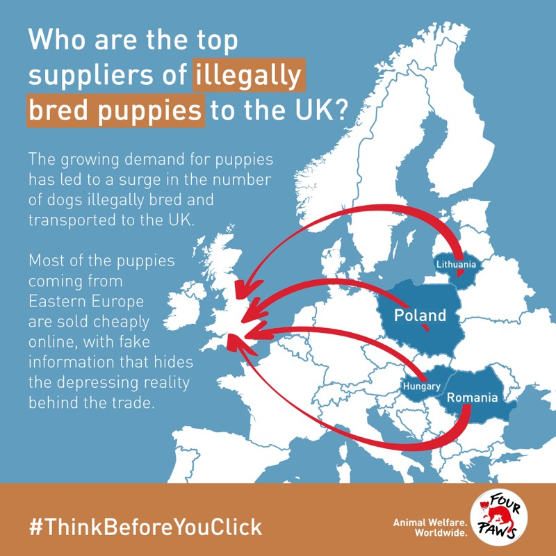 Puppy trade map