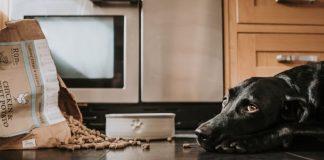 Run dog food