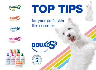 Top tips for your pets this summer