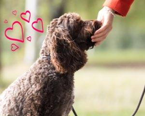 Dogs love Edgard & Cooper's