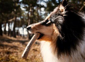 canophera Dog