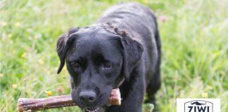ZIWI dog with a bone