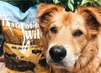 Taste of the wild dog