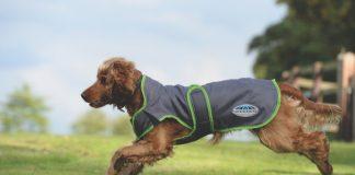 Dog in WeatherBeeta coat