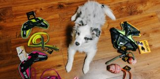 JK9 Puppy harness